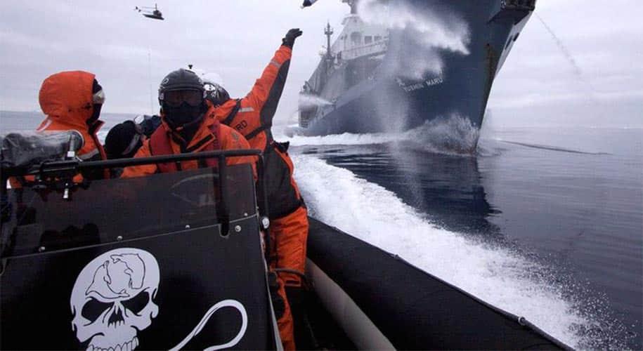 Emblème Sea Shepherd logo